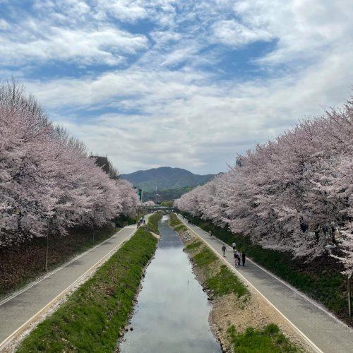 [Refresh Day] 수퍼비 벚꽃나들이 가다!